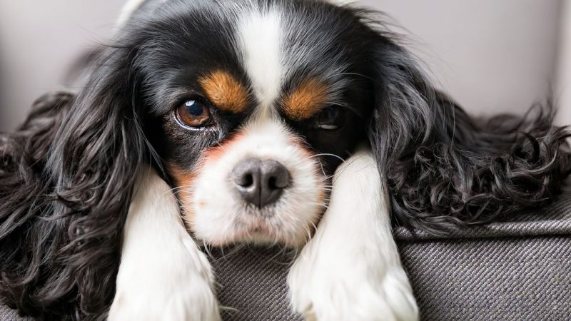 Attentive pet moving care is available for your pets with great satisfaction